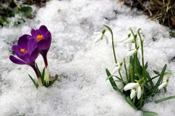 Леся Українка Весна зимова