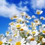 Леся Українка В магазині квіток
